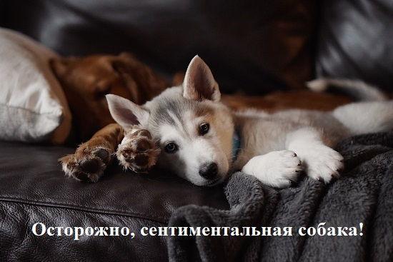 сентиментальная подпись к фото любимой собаки
