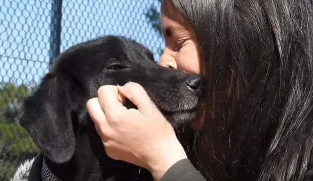 Интересные факты о собаках: 55 удивительных фактов из жизни собак