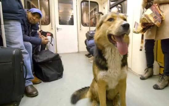 sobaka v metro